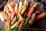 Carrots 1