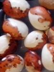 Hidasto seed