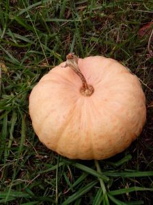 Mature pumpkin