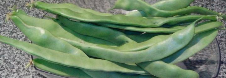 Vitalis beans