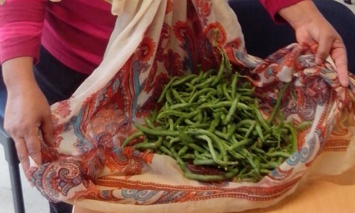 IMG_20150321_103531-bean harvest