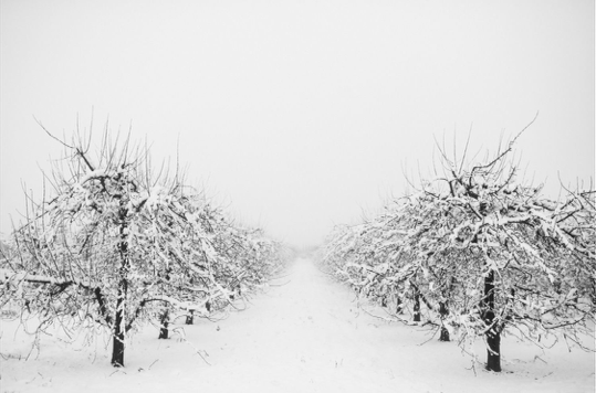 IMG_0916-orchard in winter