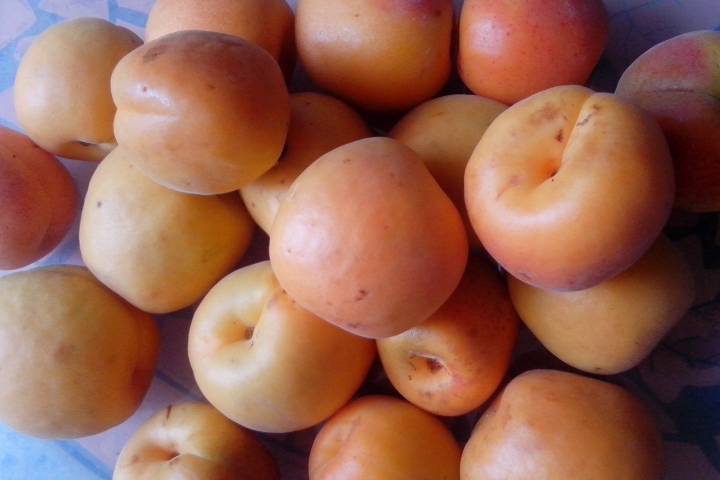 IMG_20151206_103610-Apricots