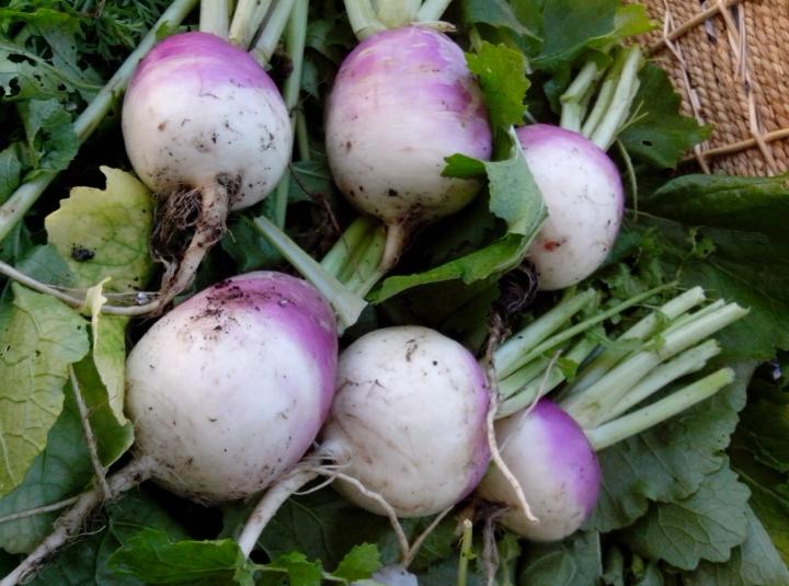 IMG_20140603_123137-Turnips 4