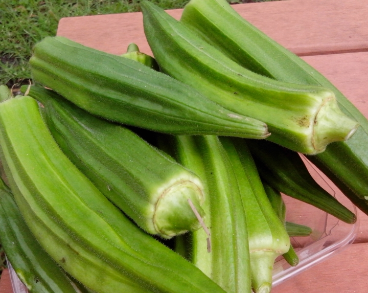 IMG_20160116_103713 Okra Harvest