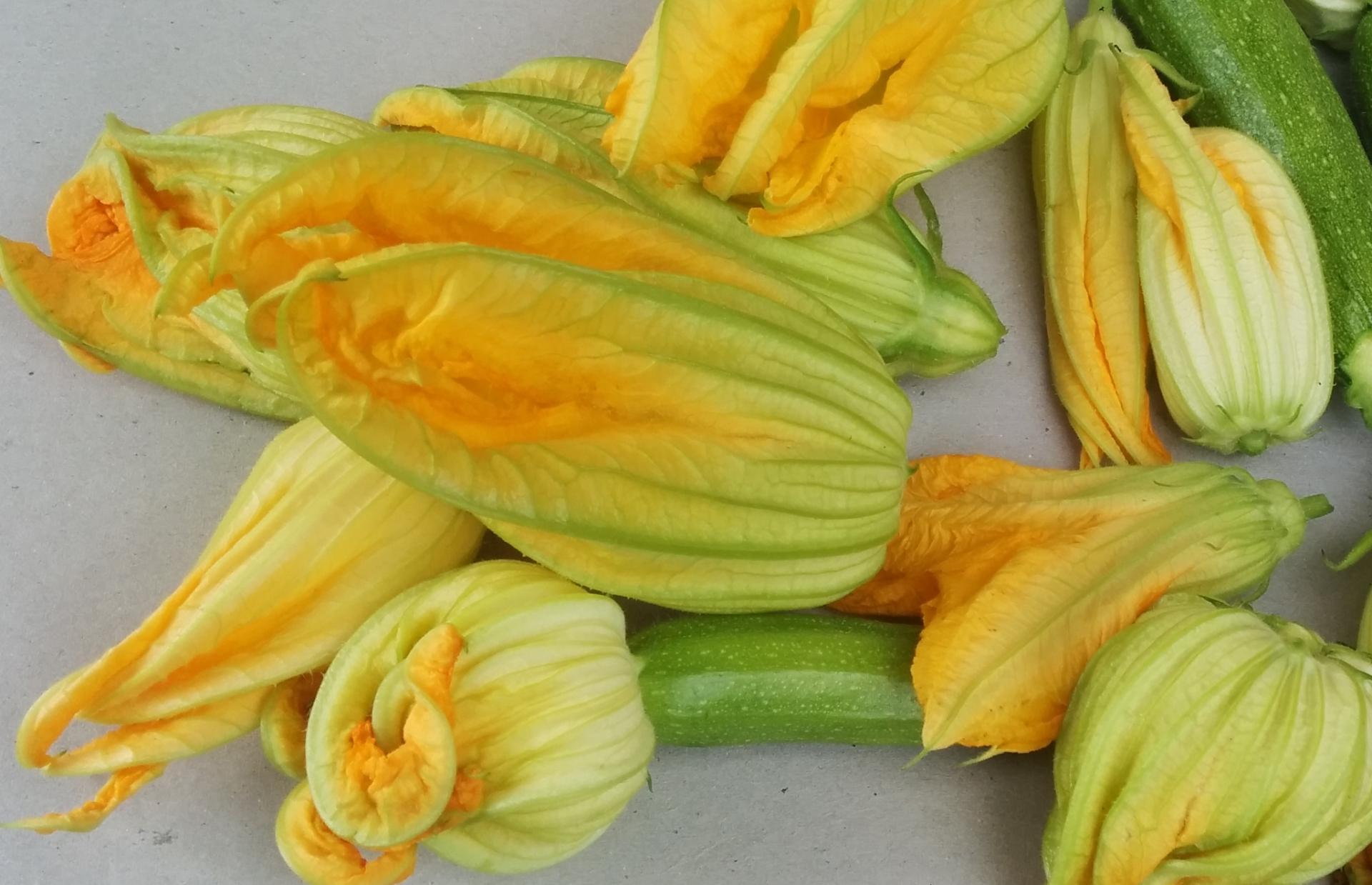 Stuffed Zucchini Flowers – The Grantham Gardener