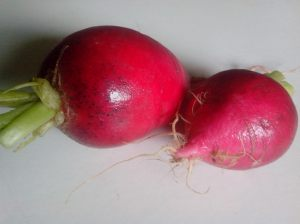 IMG_20160122_135443 (1)-radishes
