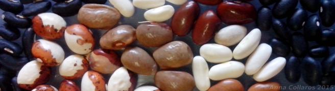 Bean Seeds 2