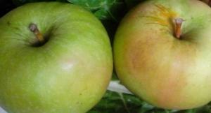 IMG_20160104_120109 (1)-Apples