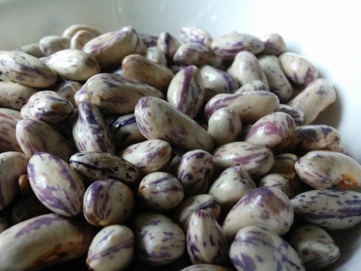 IMG_20160329_114034-borlotti beans