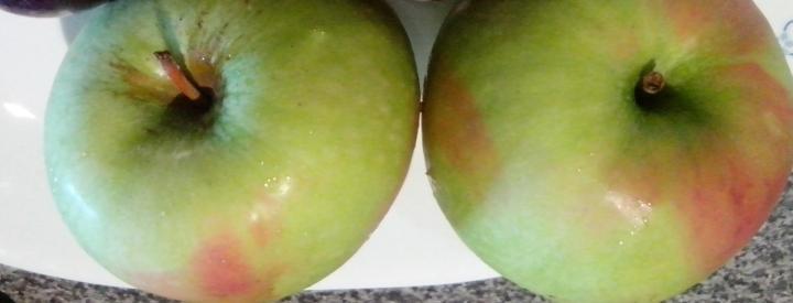 IMG_20151225_121632 (1)-granny smith apples