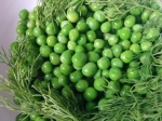 IMG_20160418_115948-peas with dill2