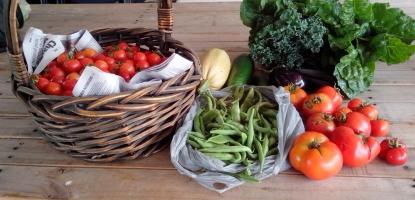 IMG_20160102_120437-vegetable harvest