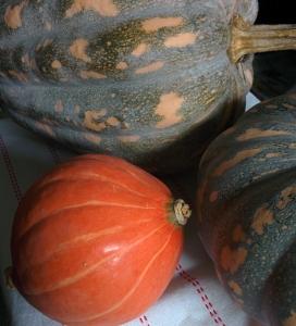 IMG_20160515_104904-Autumn pumpkins