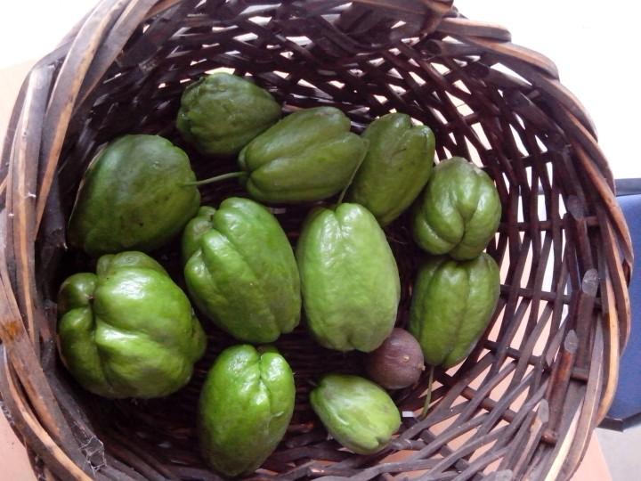 IMG_20150411_085530-Choko's in a basket