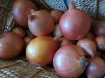 IMG_20160612_115153-brown onions
