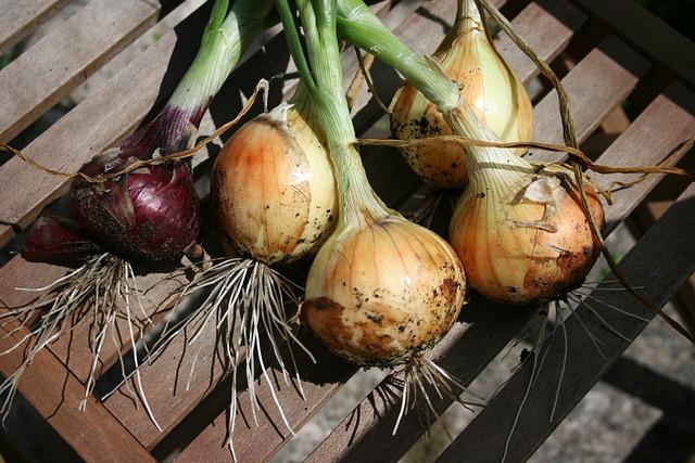 organic-14525_640-onion harvest