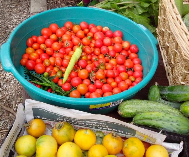 IMG_20140102_100816-Tomatoes