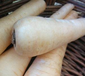 IMG_20160728_122203-Parsnips 2