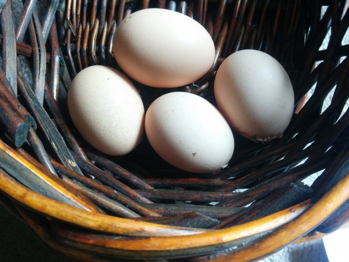 img_20160914_101127-eggs-in-a-basket