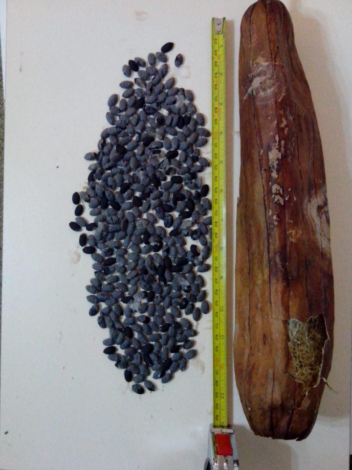 img_20130524_205314-luffa-seed-pod