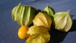physalis-1358736_1920-cape-gooseberry