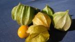 physalis-1358736_1920-cape-gooseberry