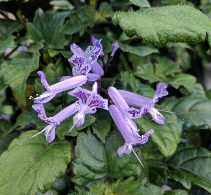 IMG_20170620_112158-Flower for July