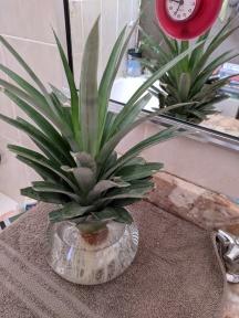 IMG_20171103_104555-pineapple 2 November 26
