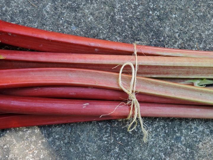rhubarb-1640832_1920