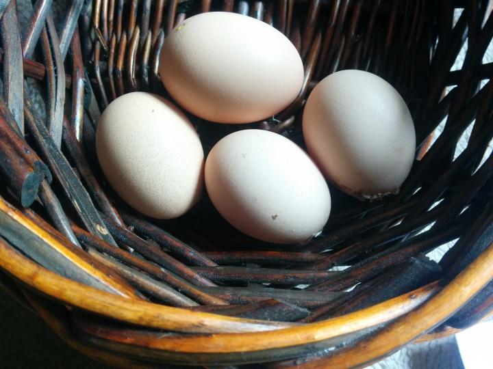 IMG_20160914_101127-Eggs Four