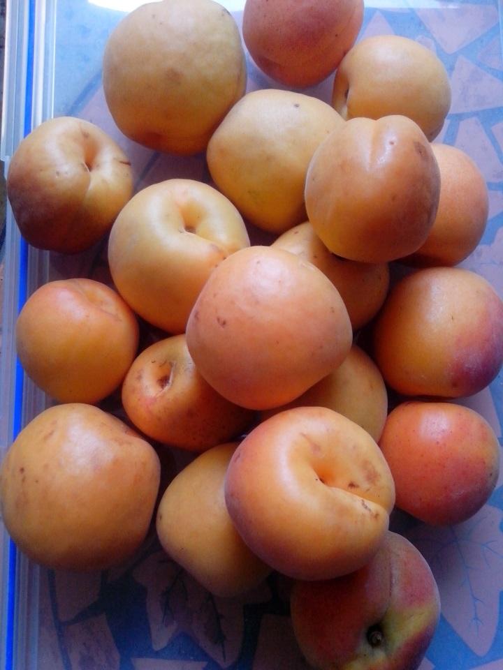 IMG_20151206_103610-Apricots