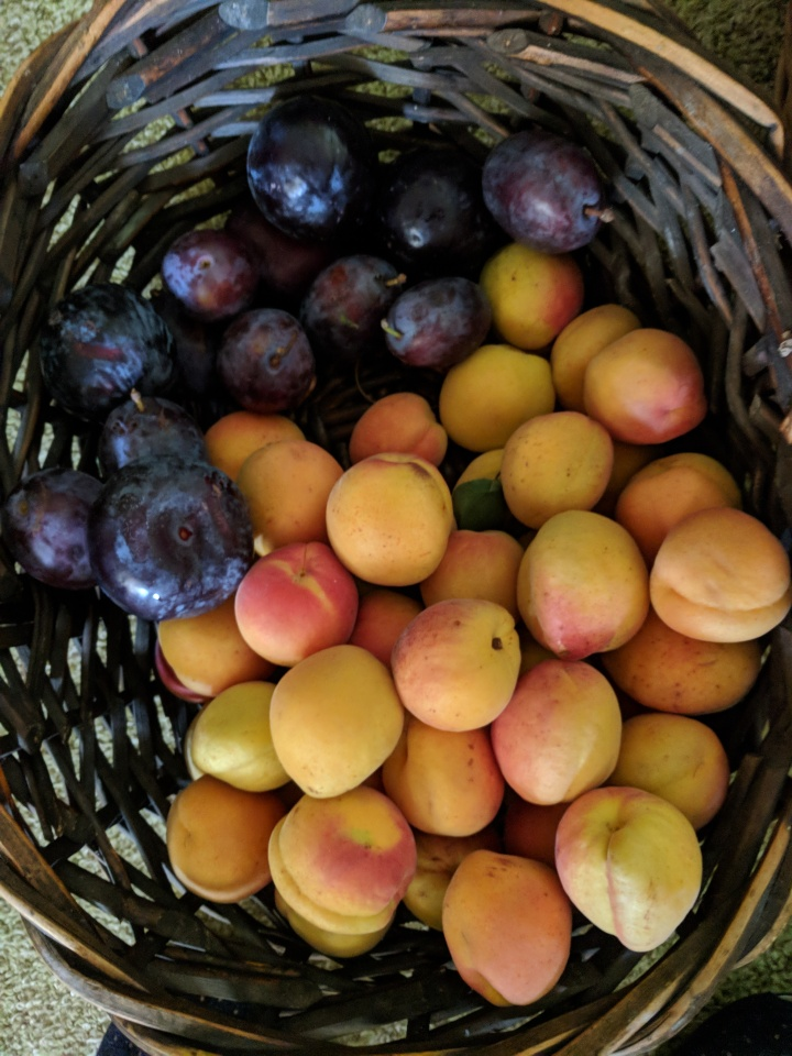 IMG_20180303_160830-Apricots and plums