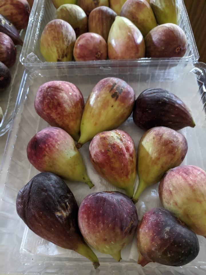 IMG_20200322_131457-Figs