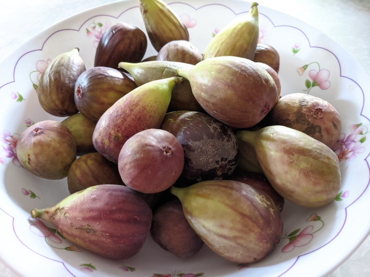 IMG_20200514_133512-Figs in a bowl