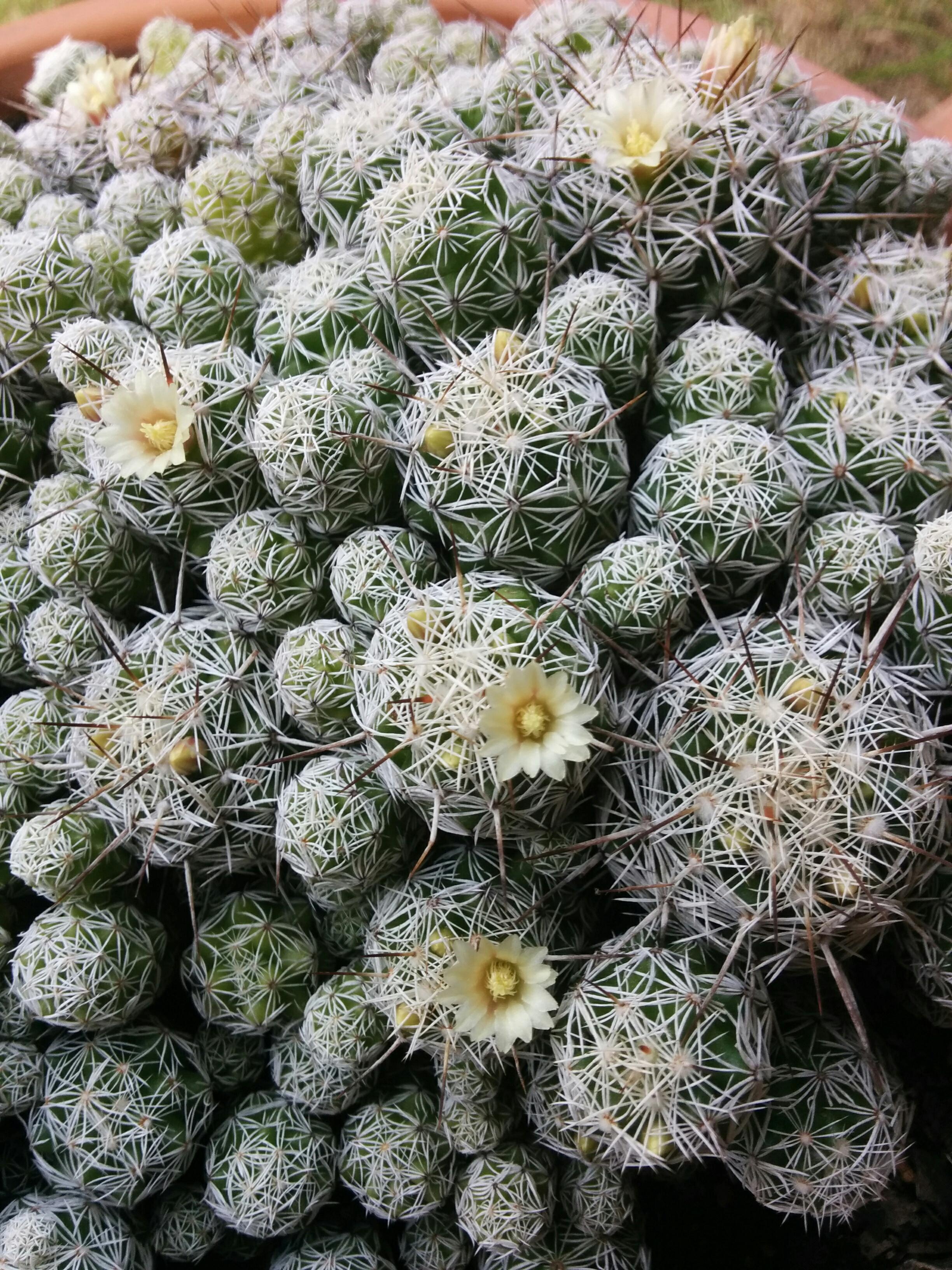 IMG_20160427_125016-Jackie's cactus